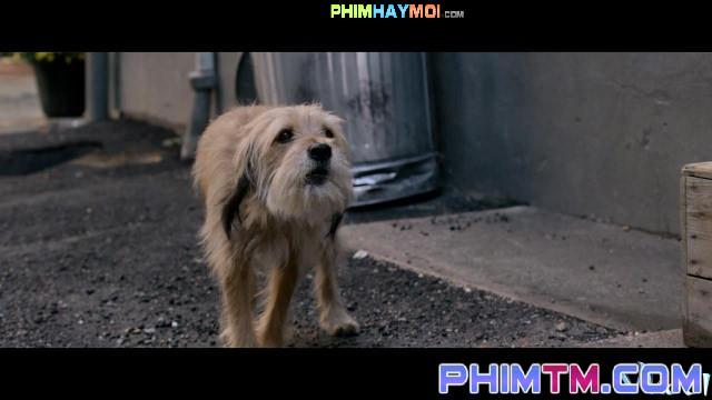 Xem Phim Chú Chó Benji - Benji - phimtm.com - Ảnh 4