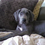 Dynamite Danes Family Album #2 - OntheCouch.jpg