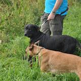 Survival voor Baas en Hond 2012 - DSC_0033.JPG