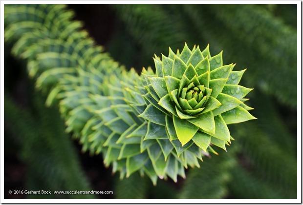 160906_Butchart_Gardens_0088
