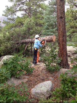 460' of Fence Line Clearing Sept 2014: Warren (let me cut the big one's) bucking up one of the downed pines