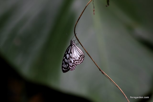 Birds & Butterflies - IMG_0094.JPG