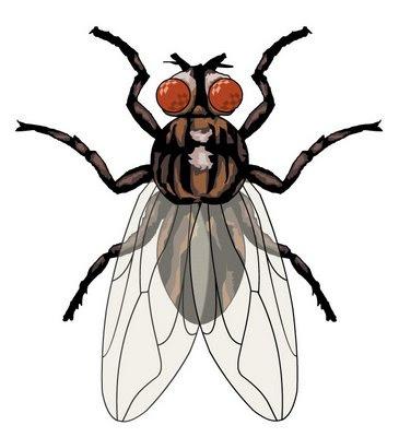 Fotos de moscas