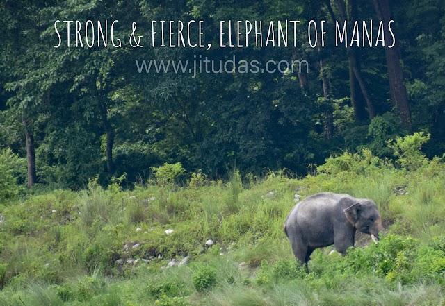 Explore Manas National park, World Heritage site of India, Assam