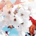 Spring Wallpapers for Chat icon