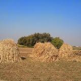Maher-Farming-03.jpg