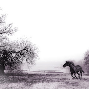 Mystic Morning by Stacey Nagy - Digital Art Things ( photoshop art, foggy morning, horse, stacey's horses, stacey nagy, composite )