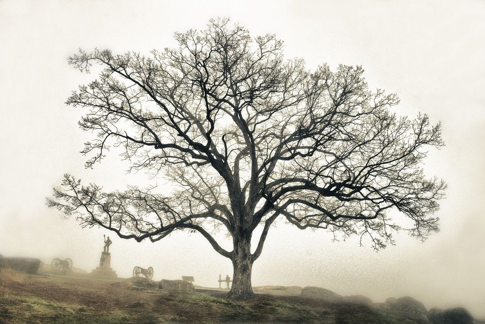 The Witness Trees of The American Civil War