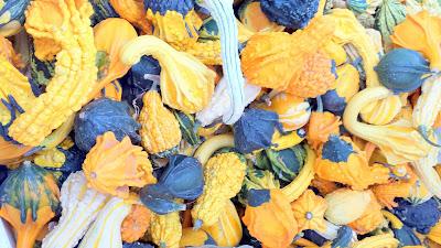Portland Farmers Market at PSU, Autumn