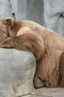 sad_bear_500.jpg