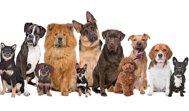 199 Dog Breeds to Adopt in Nigeria 1