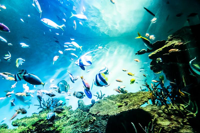 Miyajima Public Aquarium5