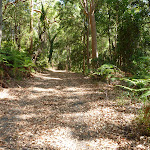 Trail through forest near Lookout Road in New Lambton Heights (400501)