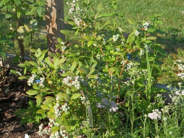 Melissa Jones Schoolyard Habitat Garden - Image%2B3.jpg