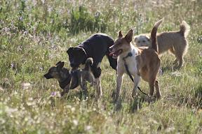 Dog Days at the Quinta - Quinta Life