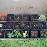 Gardening 2010, Part Two - 101_2287.JPG