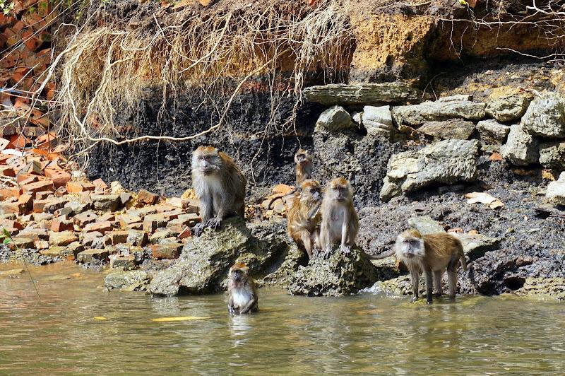 DSC06162 - Monkey island