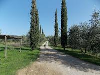 Visentini_Castellina in Chianti_6