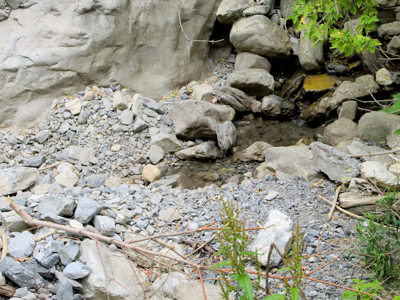 The lowest trace of water in Rock Canyon before it disappeared below the gravel