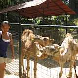 Safari, Zoobic, PI