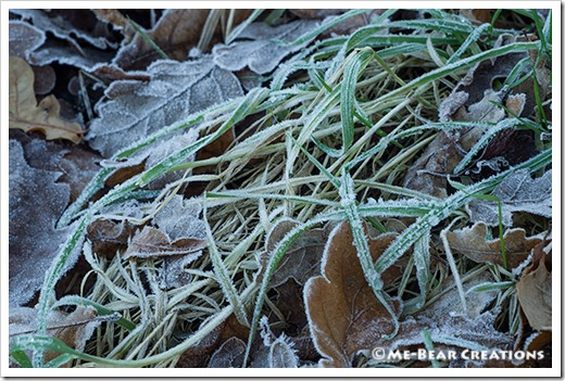 Frosted_leaves_02