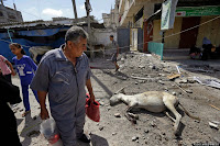 Palestinians walk past a donkey, still alive, as it lays wounded on a debris-filled road in Beit Hanoun, northern Gaza Strip, Saturday, July 26, 2014. Thousands of Gaza residents who had fled Israel-Hamas fighting streamed back to devastated border areas during a lull Saturday, and were met by large-scale destruction: scores of homes were pulverized, wreckage blocked roads and power cables dangled in the streets. (AP Photo/Lefteris Pitarakis)