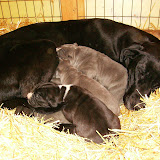 Star & True Blues February 21, 2008 Litter - HPIM0943.JPG