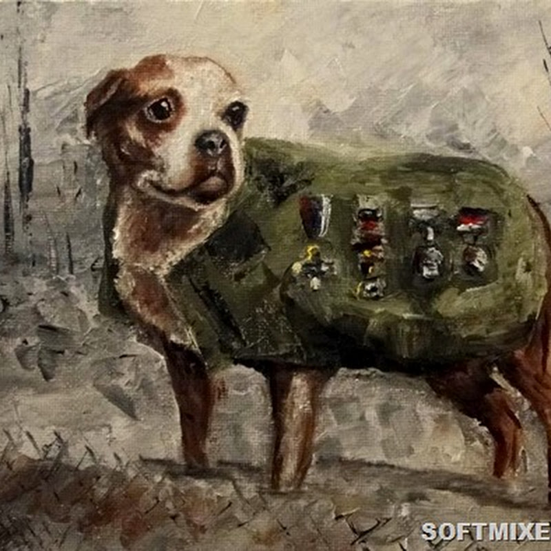Невероятные истории о героических собаках