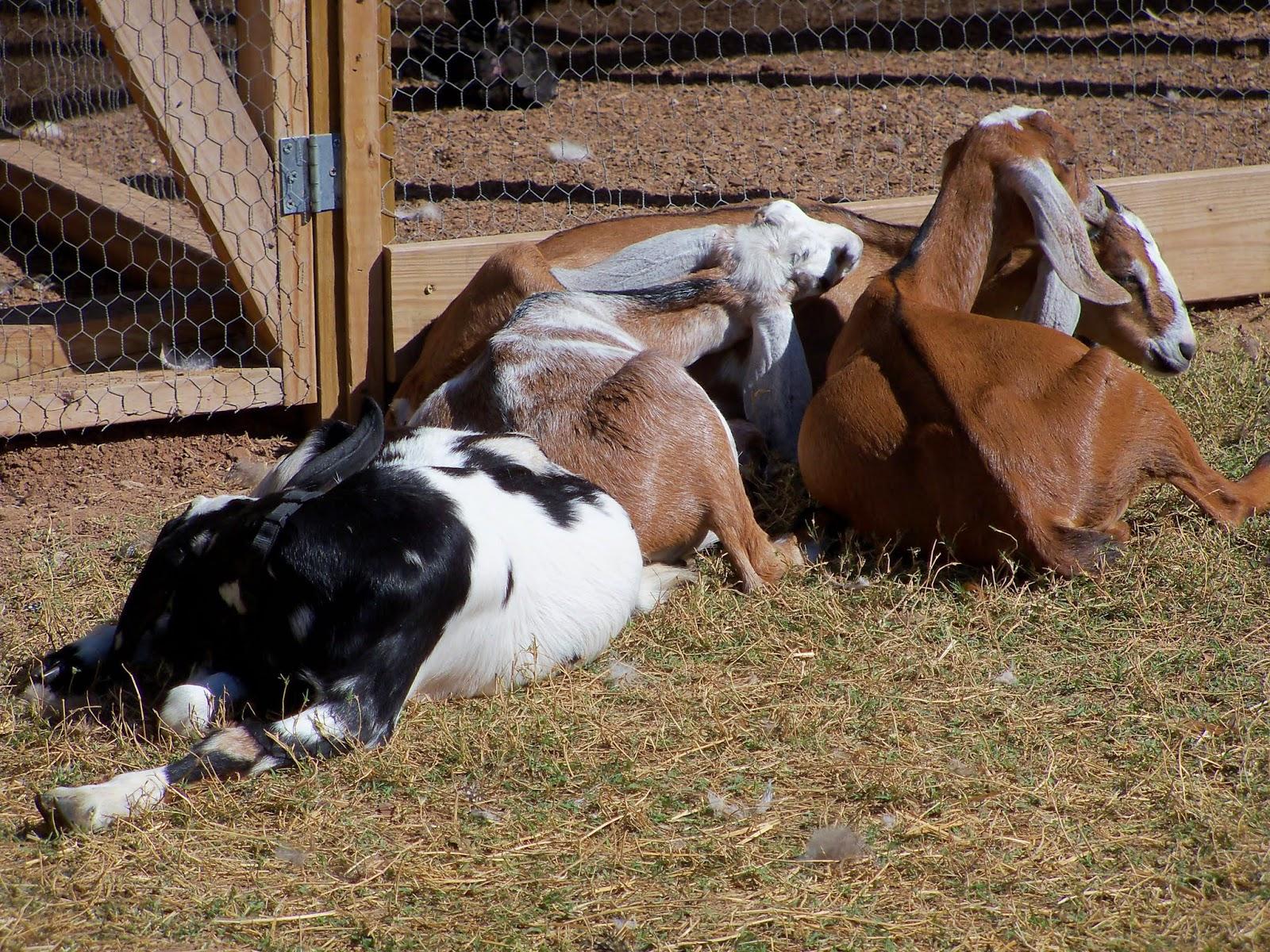 Blessington Farms - 116_5039.JPG
