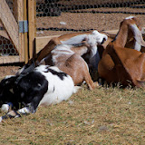 Blessington Farms - 116_5039.JPG