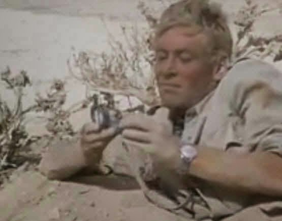 LAWRENCE OF ARABIA USING COMPASS LIKEONE WE HAVE - wpe2E5.jpg