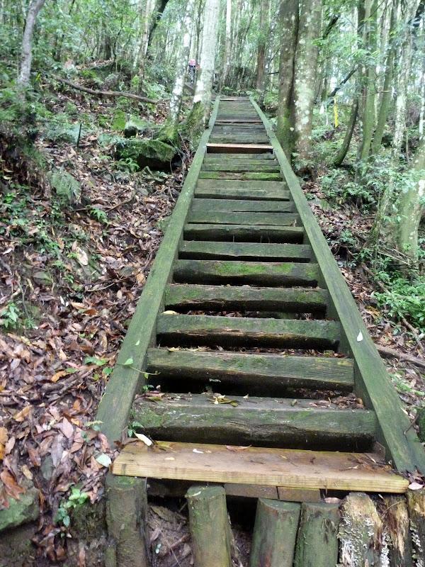 Petite randonnée au sud de Taufen, dans la région de Miaoli - P1330607.JPG