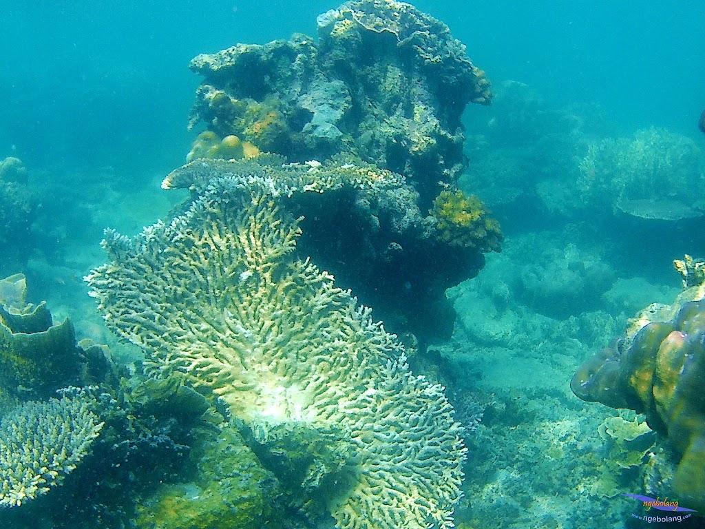 family trip pulau harapan, 1-2 agustus 2015 gopro 05
