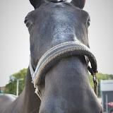 Nachtrit 2018 - Horseshoot YvB