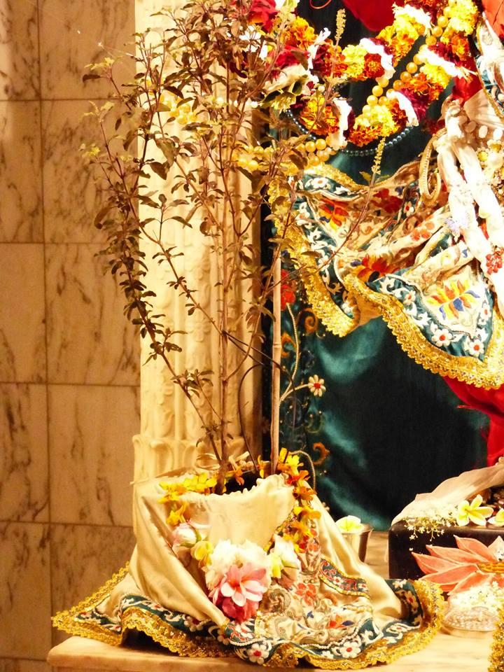 ISKCON New Govardhan Deity Darshan 12 Mar 2016 (11)