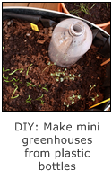 DIY - make mini greenhouses from old plastic bottles