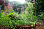 Small vege gardens- where space permits