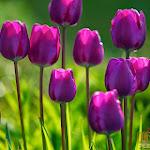 Flower 038_1280px.jpg