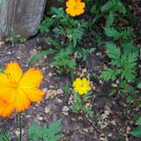 Gardening 2012 - 115_1827.JPG