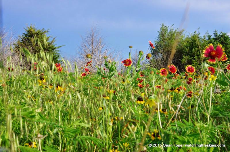 05-26-14 Texas Wildflowers - IMGP1399.JPG