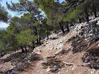 Γραφική διαδρομή στο δάσος
