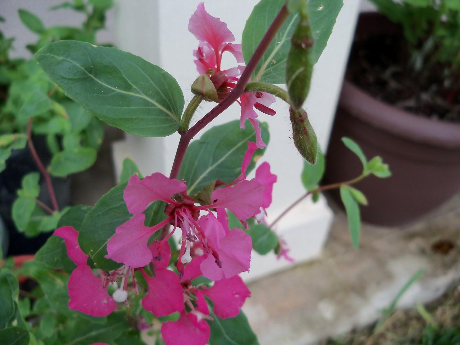 Gardening 2012 - 115_1415.JPG