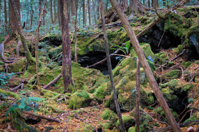सुसाइड फॉरेस्ट या ऑकिगहरा जंगल,जापान-anokhagyan.in