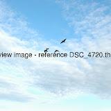 DSC_4720.thumb.jpg