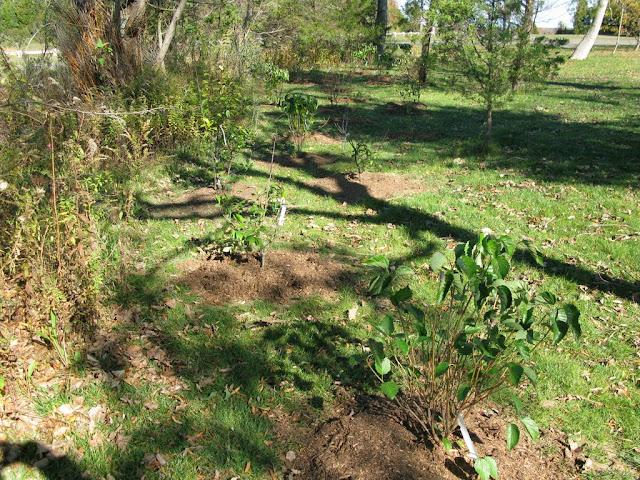 Hammo Planting - Shannon Schiesser - IMG_4967.JPG