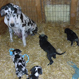Gretta & Cobalt Blues 3/24/12 litter - SAM_3371.JPG
