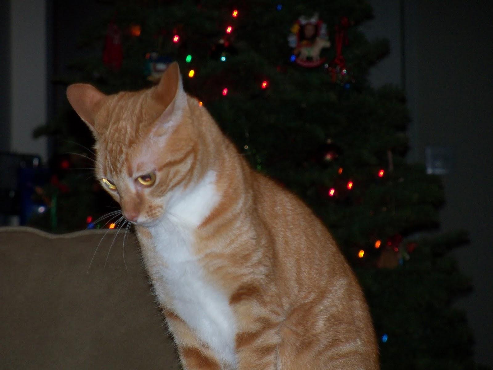 Christmas 2012 - 115_4795.JPG