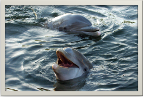 Dolphin Facts, Dolphin Amazing Facts