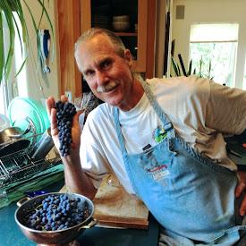 Glenora Grape Harvest