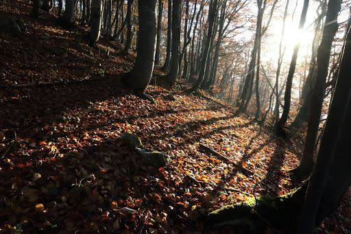 Ráno v bukovom lese pod Magurou